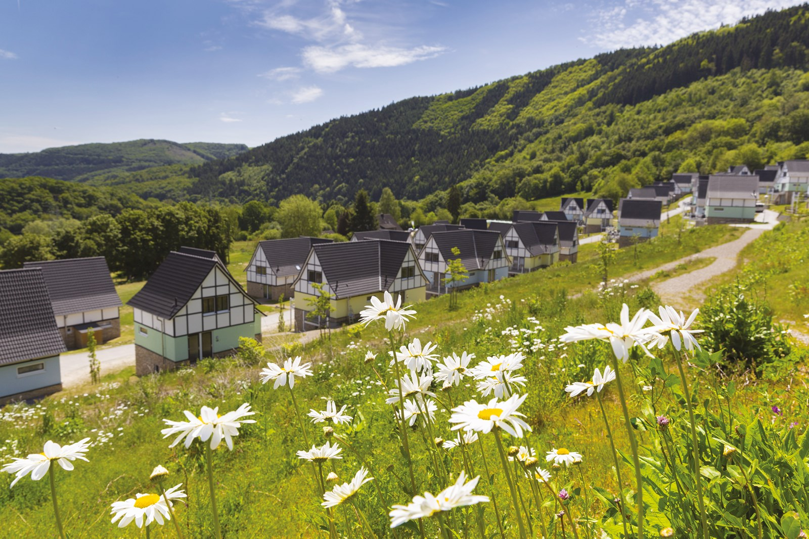 Do you want to experience Resort Eifeler Tor in Heimbach yourself?