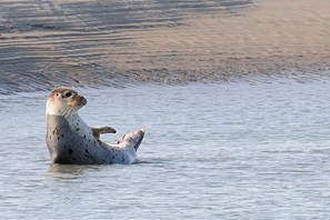 Watch seals at Dormio Resort Berck-sur-Mer